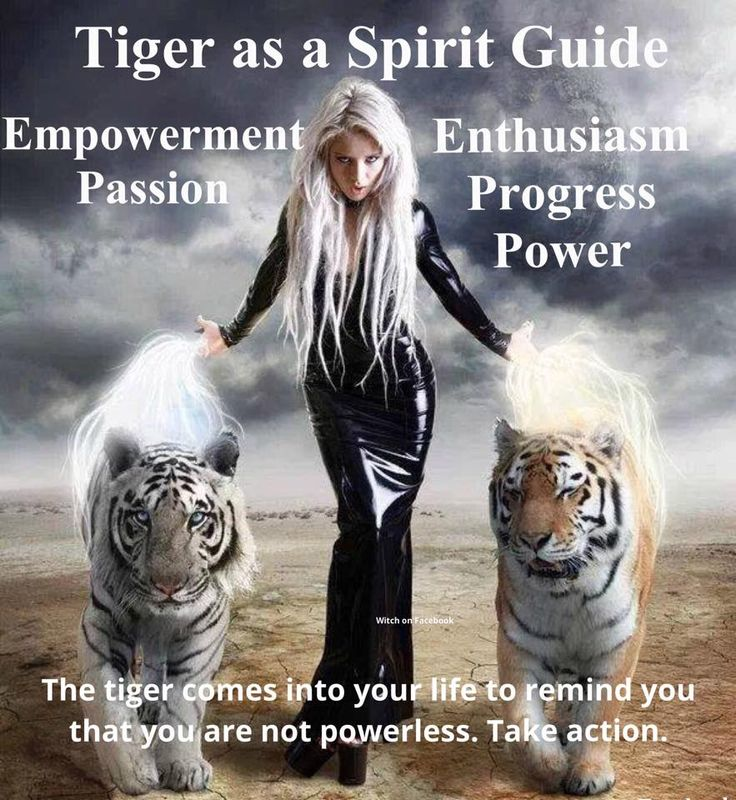 how do you know your animal spirit guide