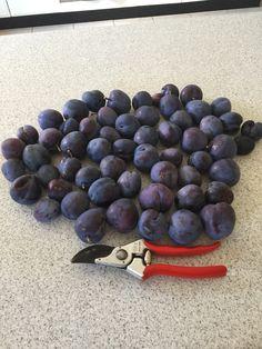 edible gardens a practical guide by craig castree