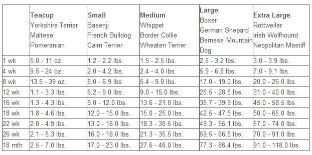 orijen puppy large feeding guide