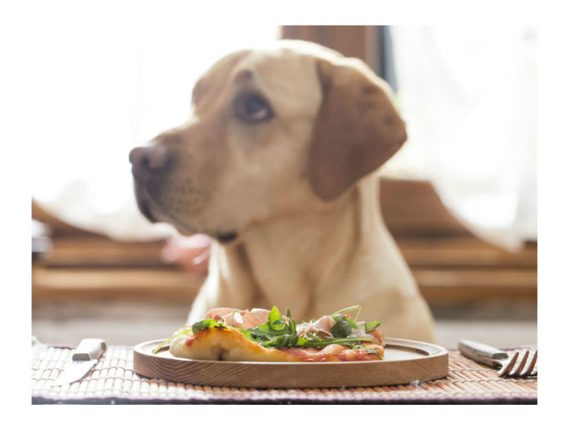 dining in the dark guide dogs