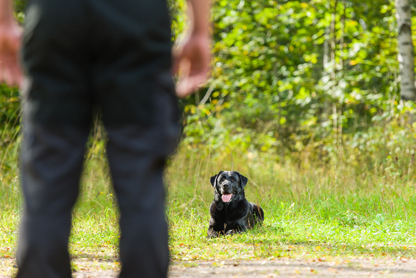 guide dog training schools uk