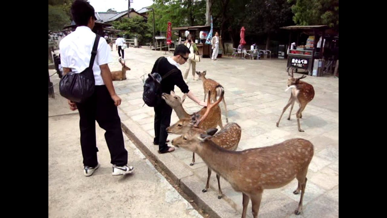 japan guide nara deer park